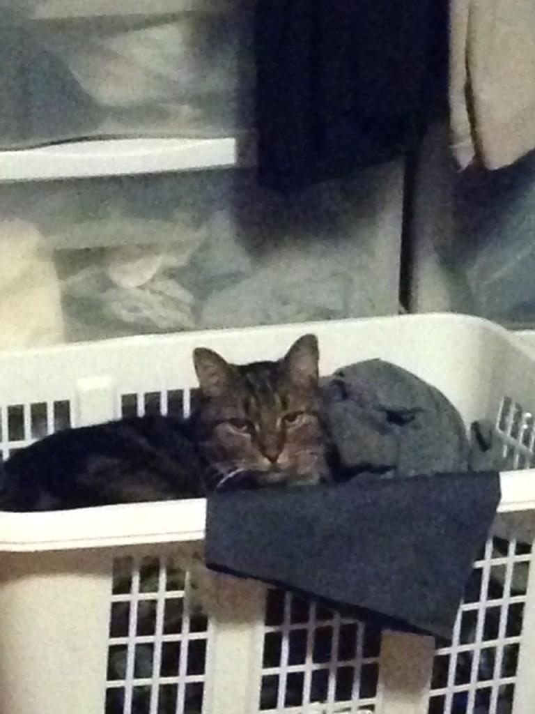 Ziggy in the office basket.