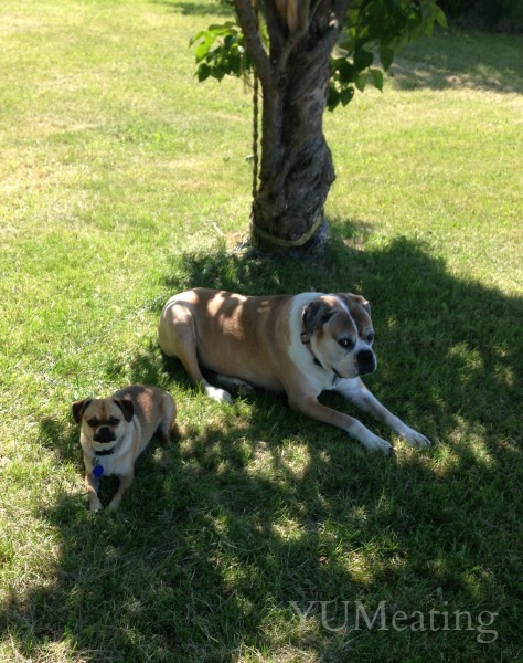 casey and tink rest under a tree