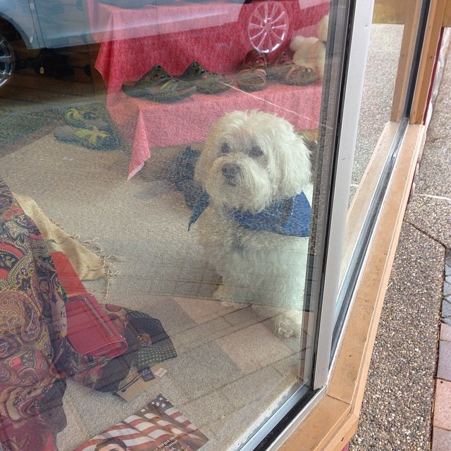 shoe shop dog