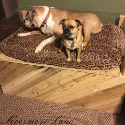 Pallet Wood Dog Bed with Storage #diy #upcycle #palletwood