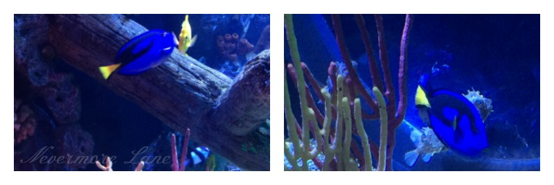 Underwater Wonderment at Sea Life Michigan {Auburn Hills, Michigan}