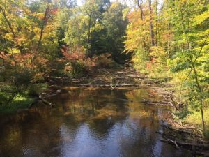 Hiking Through Fred Russ Forest Park | Decatur , MI #travel #hiking #trails